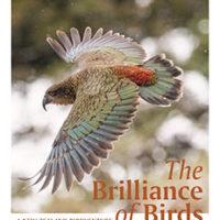 The Brilliance of Birds – A New Zealand Birdventureby Skye Wishart and Edin whitehead