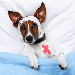 Lifestyle: Pet injuries and ailments that cost owners a fortune